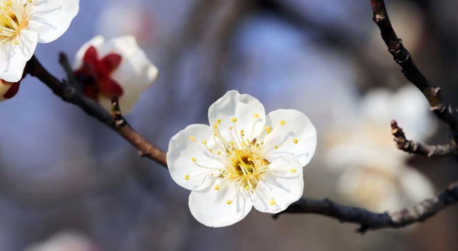 白い花のディティール